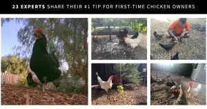 22 Experts Share Their #1 Tip For First-Time Chicken Owners